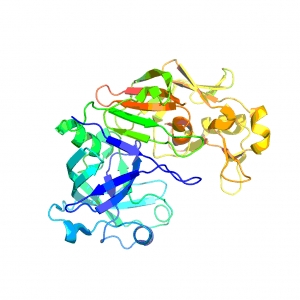 Enzymet chymosin är det ena av två enzym som ingår i ostlöpe.